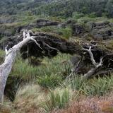treesangle