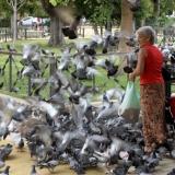 women-feeding-the-pigeons