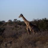 Namibia-4